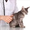 Ветеринарные клиники в Подгорном